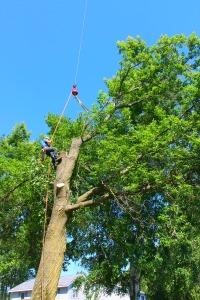 guy climbing tree