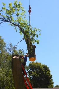 last branch cut