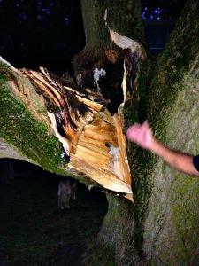 limb decay