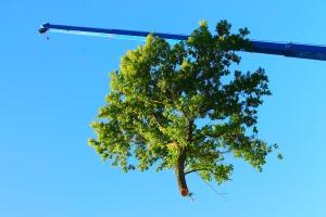 tree & crane