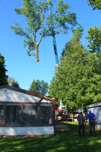 tree in air over Barretts